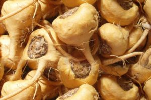 Maca root remedy for sexual problems